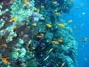 marsa-alam-aquario-elphistoneB